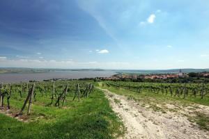 Palava vinice a Nove Mlyny