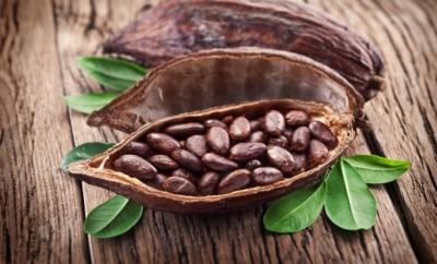 Kakaové boby2