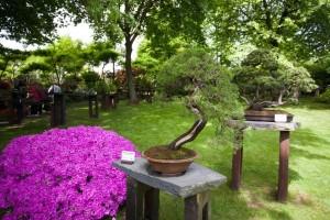 výstava bonsají (4) (1)