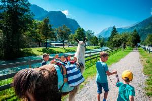websize_ferienprogramm_wanderung_mit_lamas_und_alpakas_zell_am_see_kaprun_tourismus_mairitsch