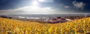 Panorama_vinice