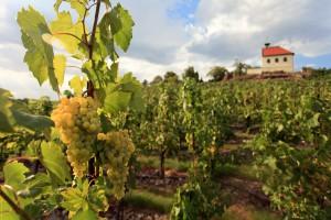vinice a kaple