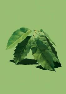 CactusGarden_Ingredient_RVB