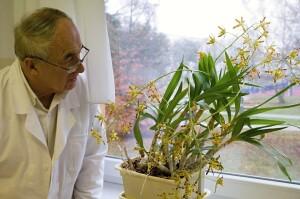 Vzpomínaná orchidej Anselia Africána na okenním parapetu v pracovně Dr. Syrovátky