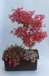 Výhoda samozavlažovacího zařízení spočívá v tom, že se v truhlíku mohou pěstovat i různé druhy rostlin pohromadě