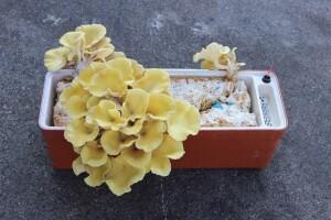 Daří se zde i houbám, které se hodí i ke konzumaci!